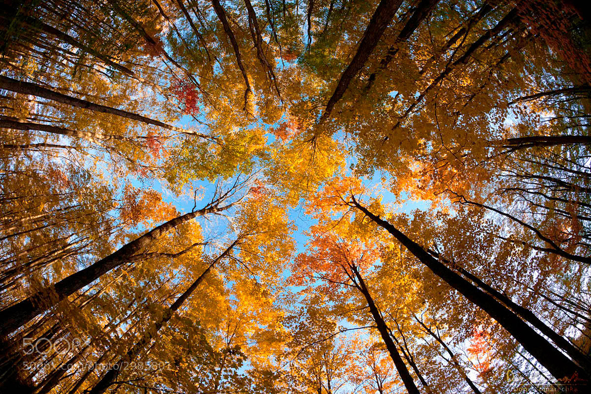 Photograph Fisheye Fall Colours by Don Komarechka on 500px