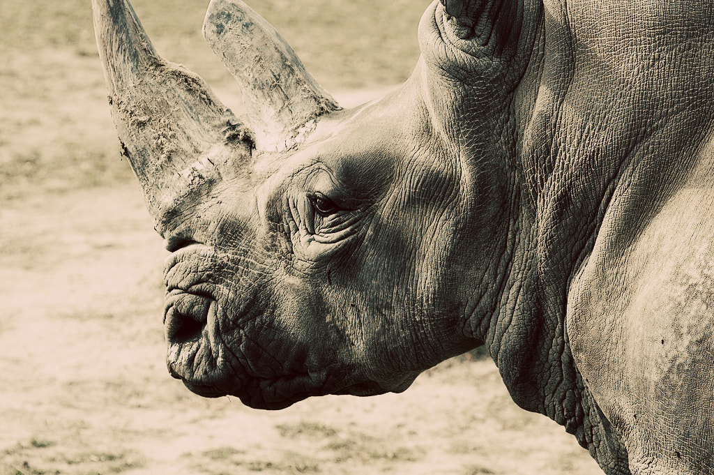Photograph Rhinoceros by Tom Creighton on 500px