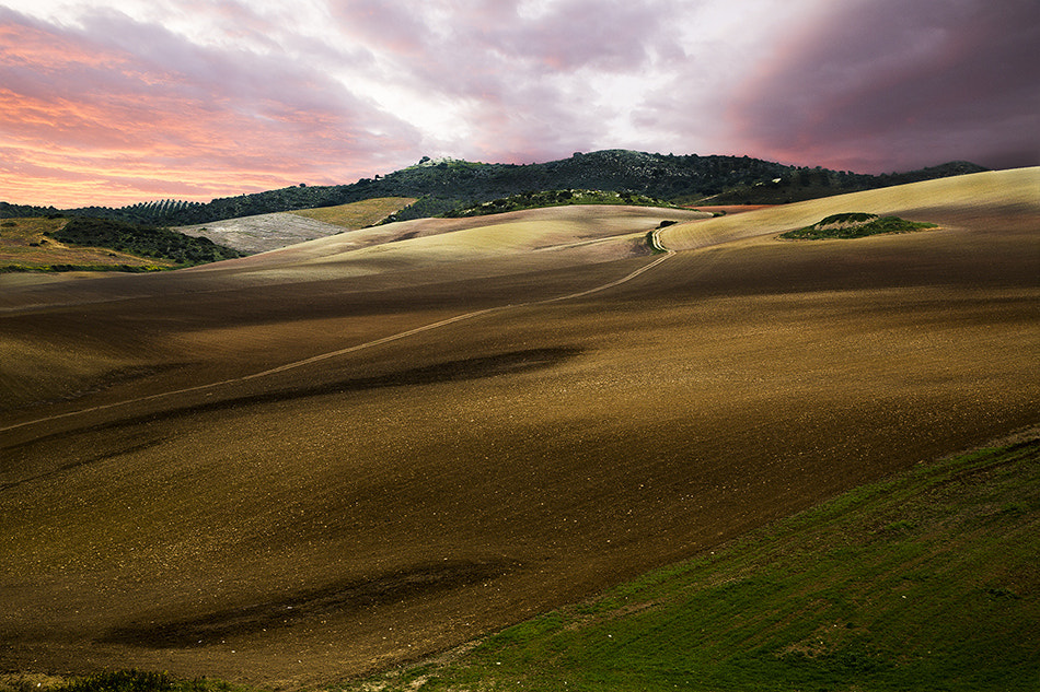 Photograph Dar color a algo by Max Witjes on 500px