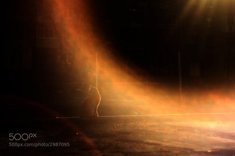 Photograph *** by Филипп Суколенов on 500px