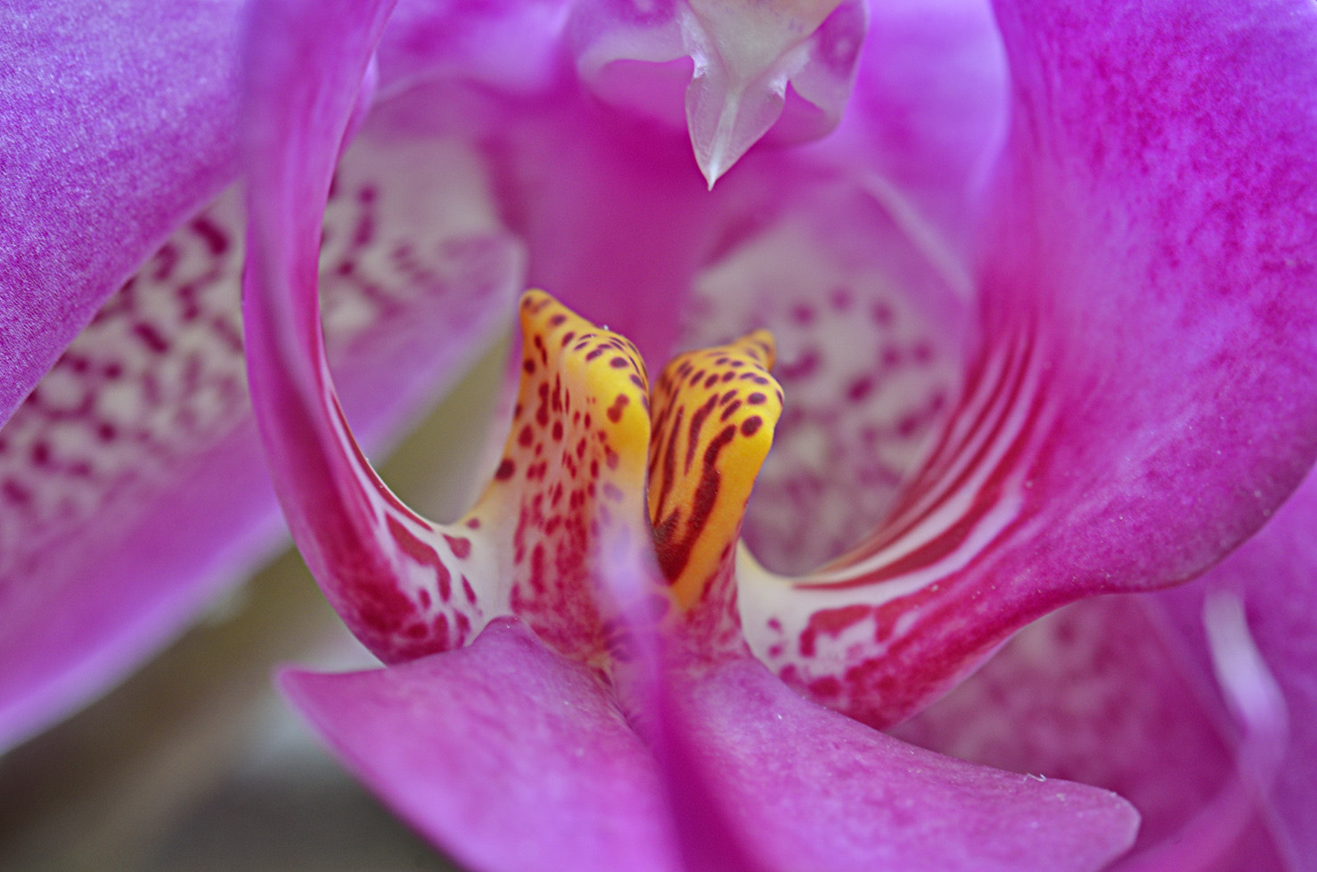 Photograph Phalaenopsis by Philippe Herry on 500px