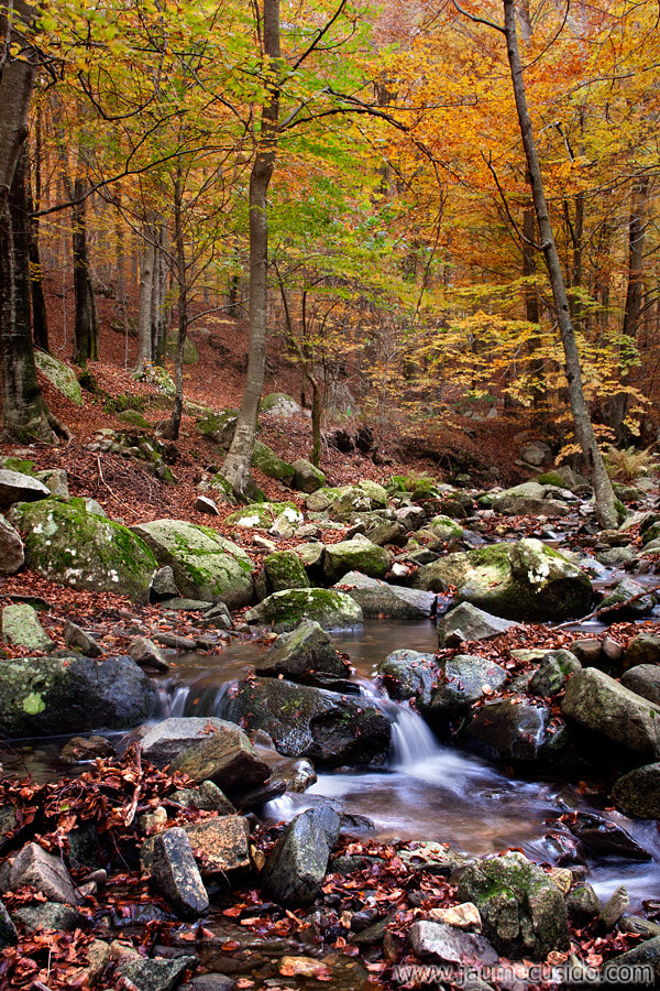 Photograph a look at the autumn  by Jaume Cusidó on 500px