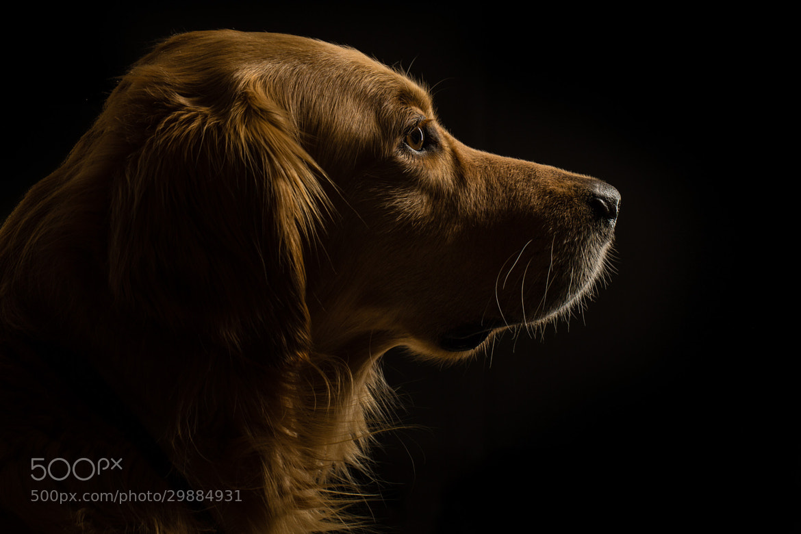 Photograph Profile View by Ingo Meckmann on 500px