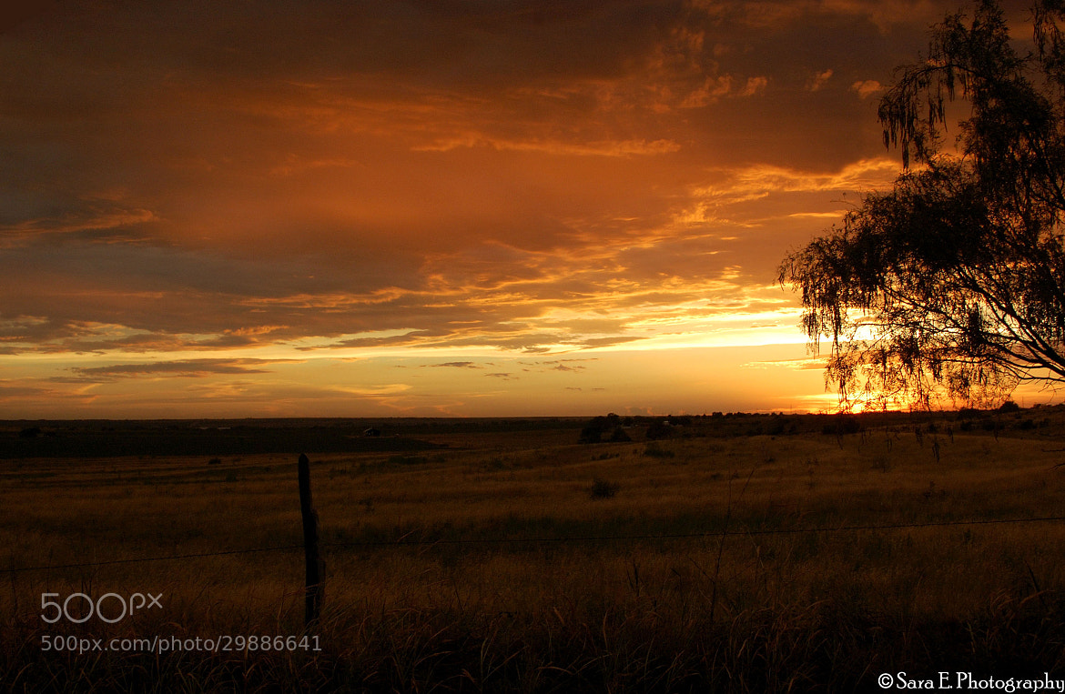 Photograph West Texas Sunset by Sara Giddens on 500px