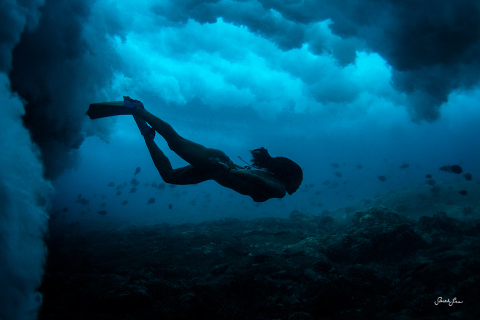 Photograph under the sea by Sarah Lee on 500px