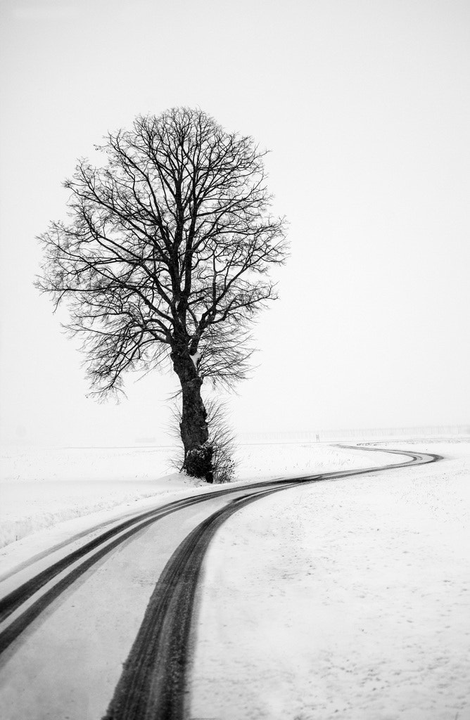 Photograph Winter Tree by Albin Bezjak on 500px
