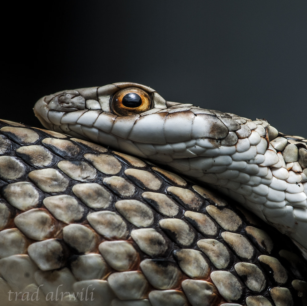 Photograph snake by torad1 on 500px