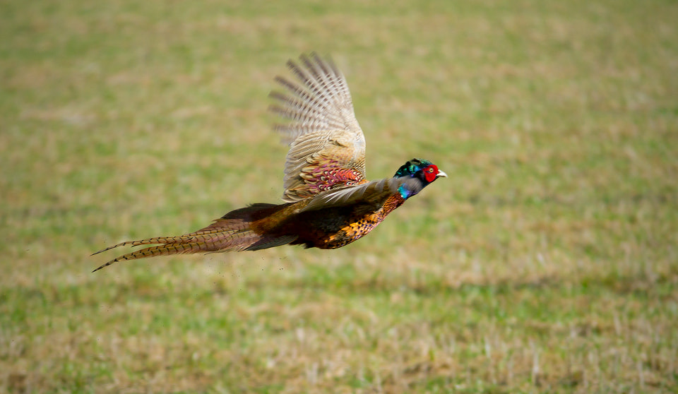 Photograph Escape by Laura C. Birdie on 500px
