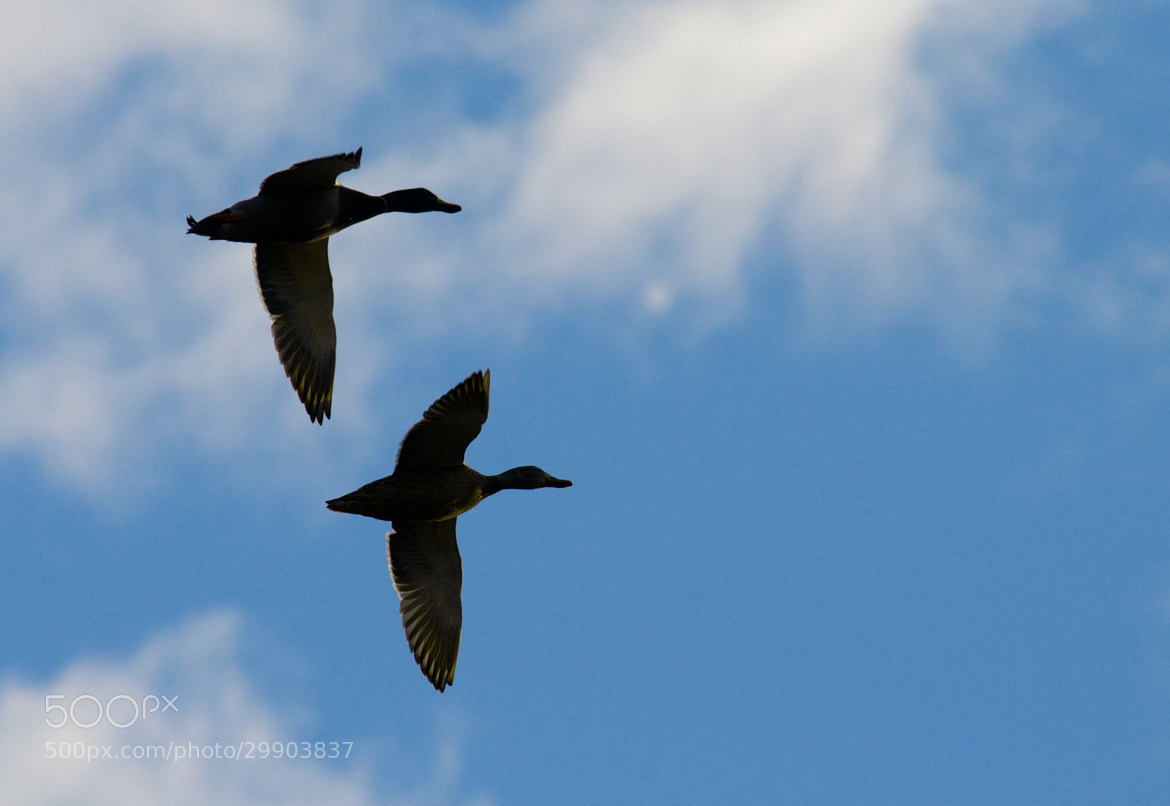 Photograph Early Winter Flyby by Mike Fuhr on 500px