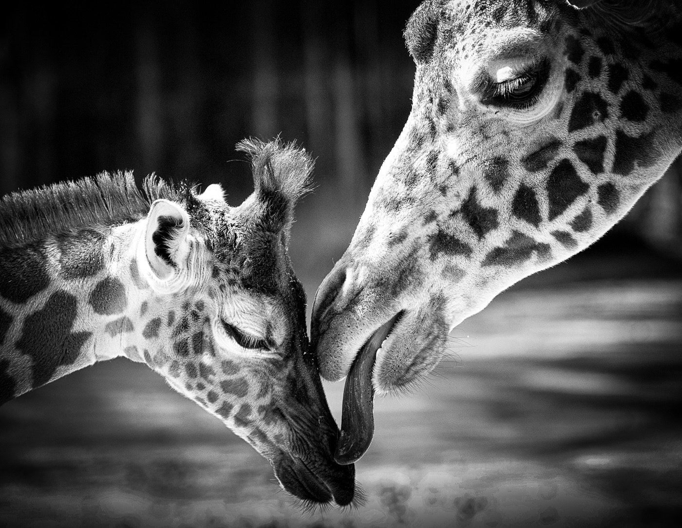 Photograph A Mother's Love by Carmody Baker on 500px