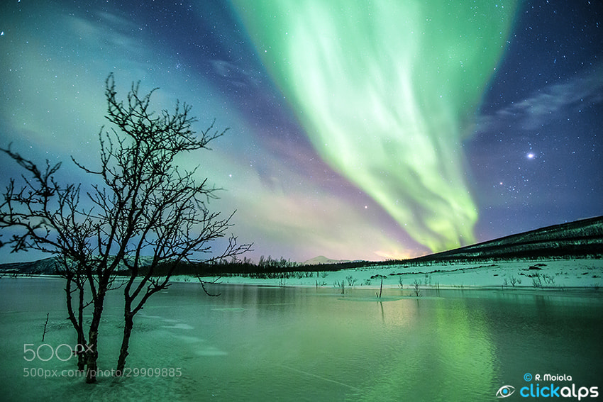 Photograph Northern Lights 2013 by SysaWorld Roberto Moiola on 500px