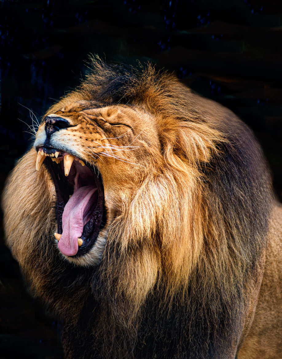 Photograph The King Roars by Bipphy Kath on 500px