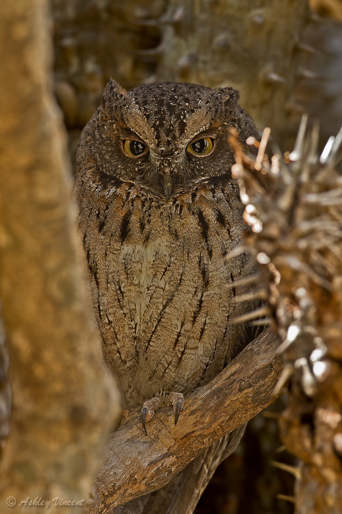 Photograph Thorny Hideaway by Ashley Vincent on 500px