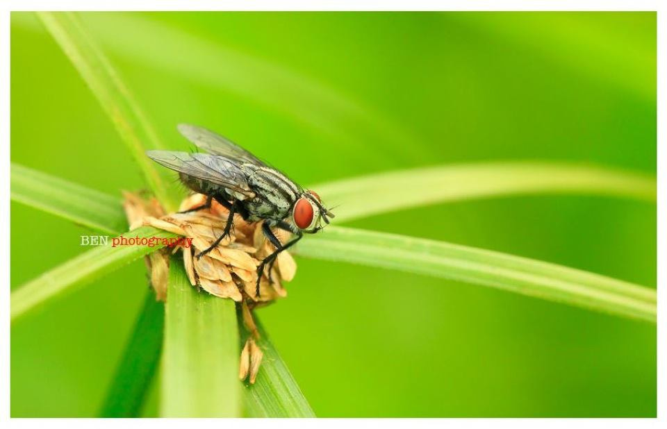 Photograph THE FLY .. by Benjamin Pelawi on 500px