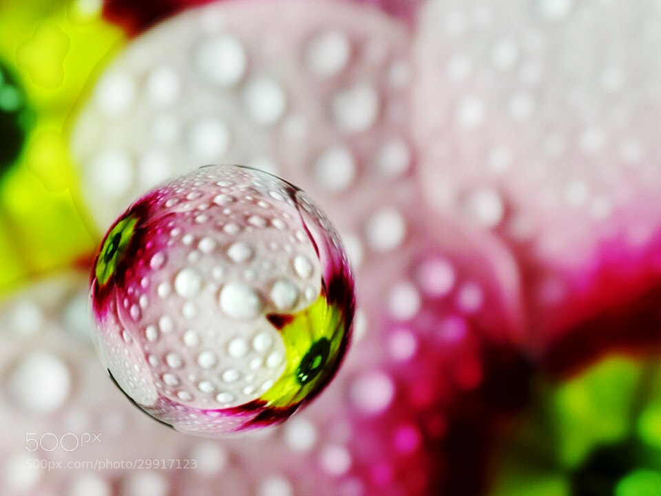Photograph Bubbled Spring by Moni  on 500px