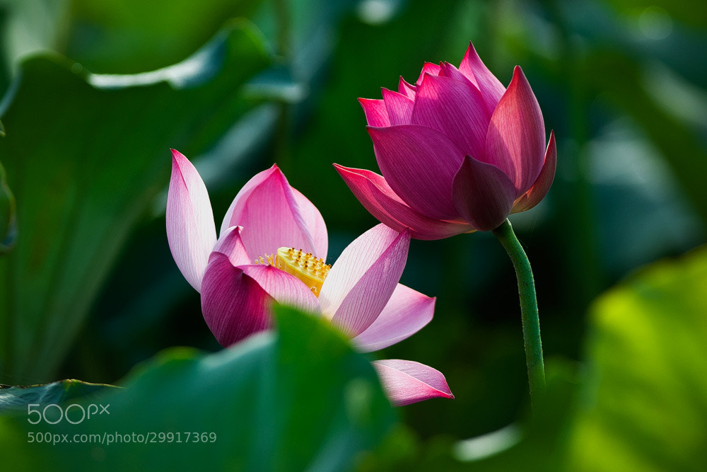 Photograph Side by side by Hai Thinh on 500px