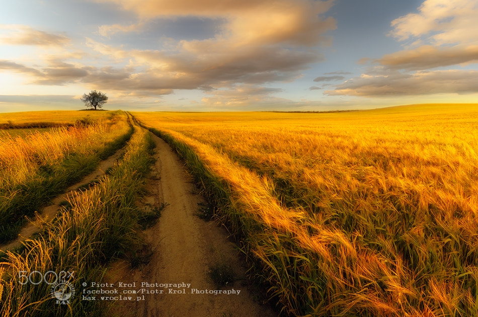 Photograph countryside by Piotr Krol on 500px