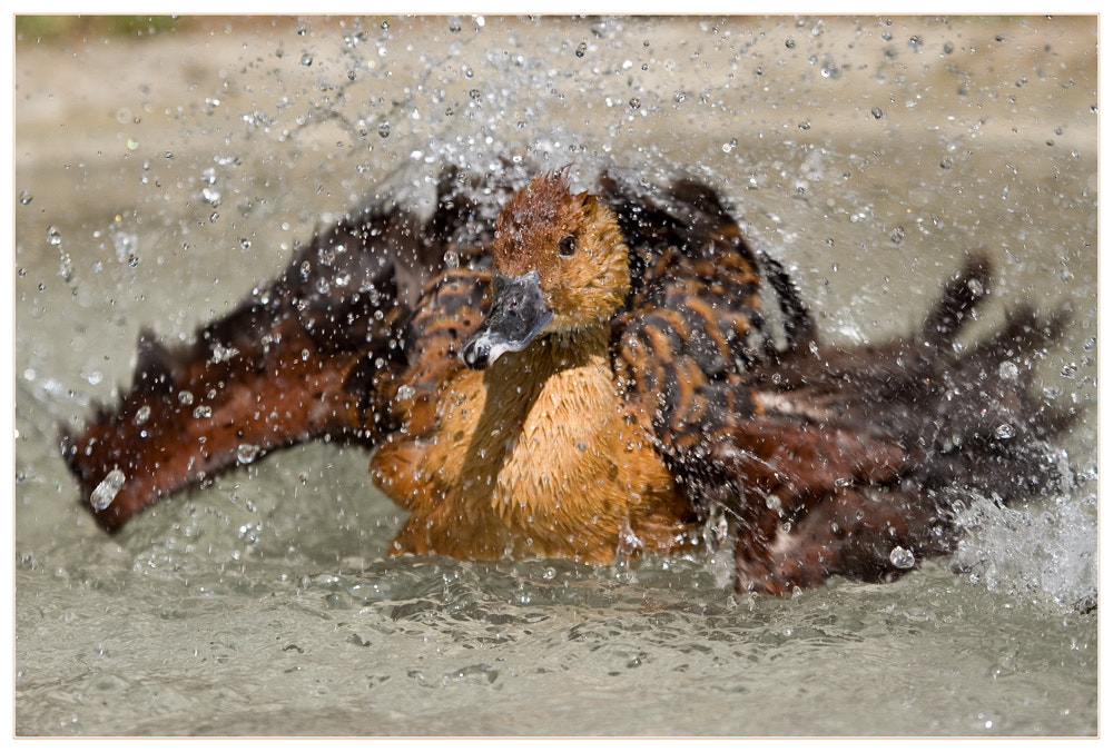 Photograph Intensive Bathing by Tobi K on 500px