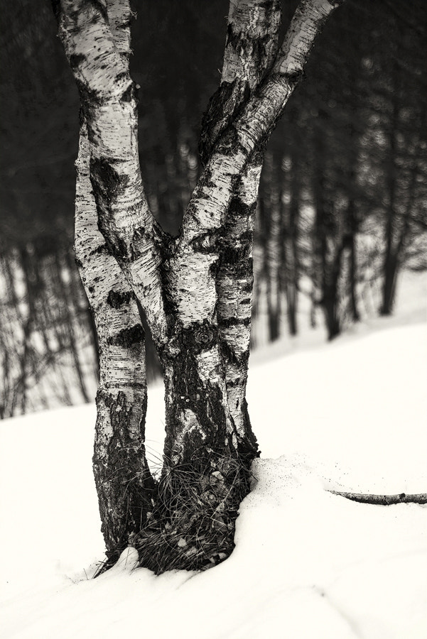 Photograph winter composition II by FeFoPhotography  on 500px