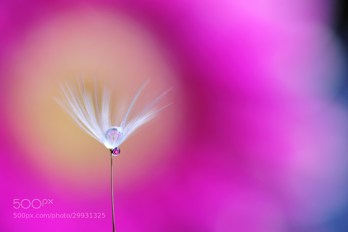 Photograph Tiny pendant by Lafugue Logos   on 500px