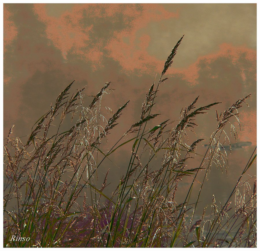 Photograph End of summer by Rinso . on 500px