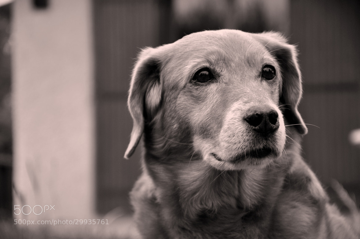 Photograph My sweet dog by Celine Hlms on 500px