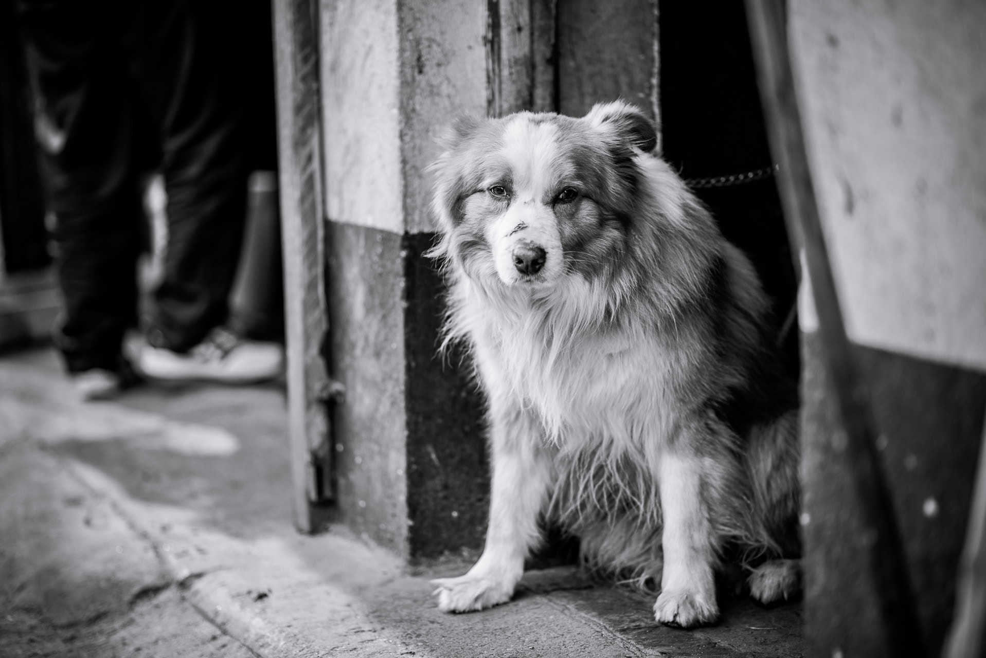 Photograph Man's Best Friend by Kevin Dharmawan on 500px
