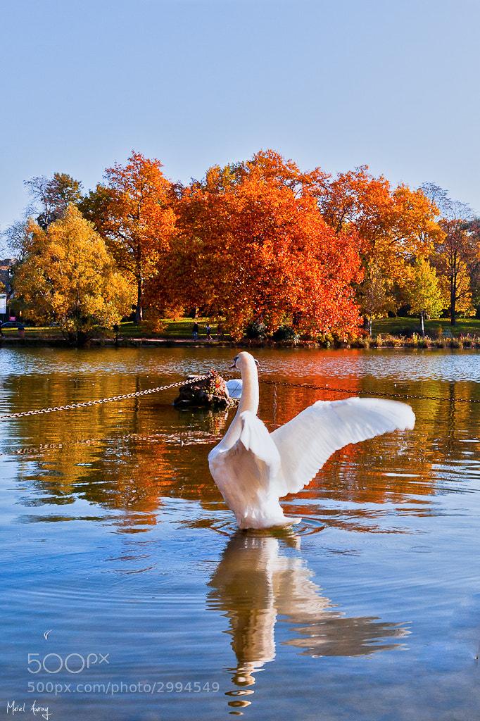 Photograph Les couleurs de l'automne by Muriel Auvray on 500px