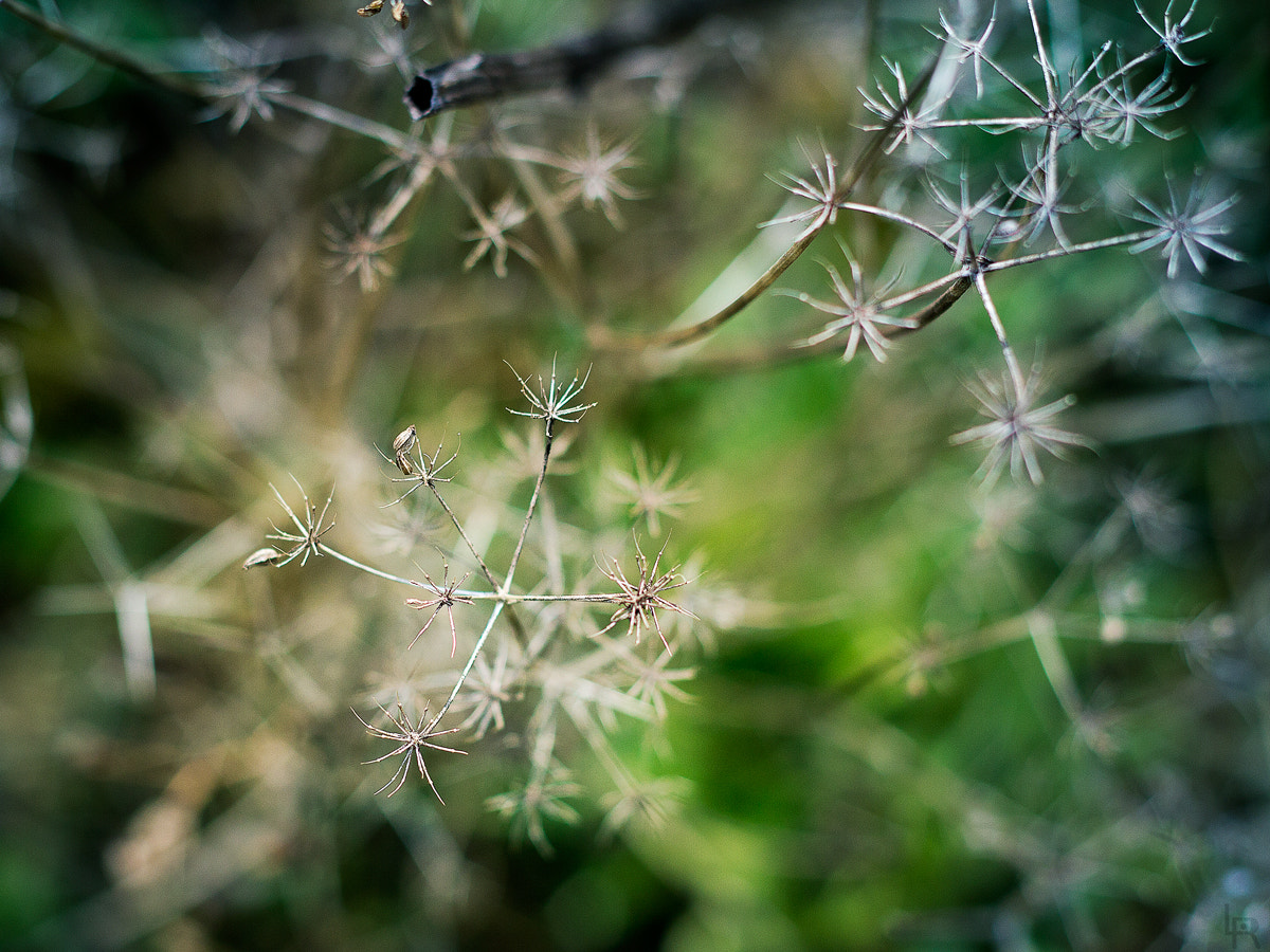Photograph Starry vegetation by Emilie Filrouge on 500px