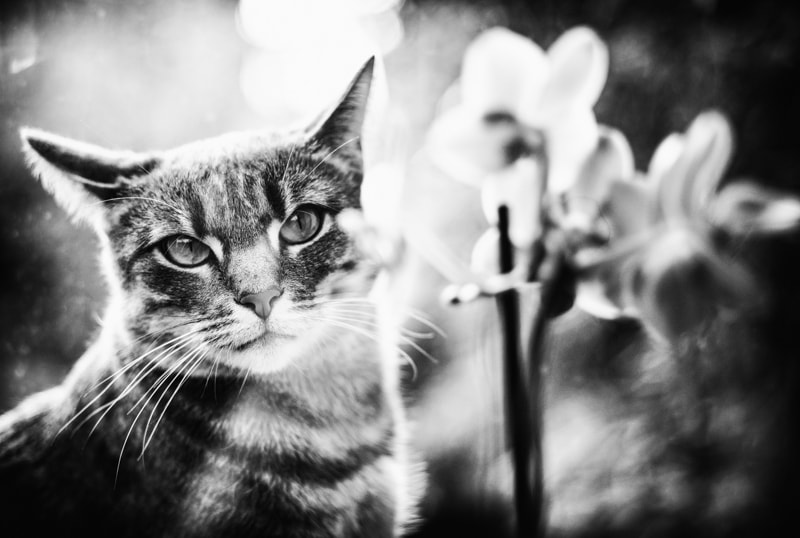 Photograph orchid cat by Vero Nick on 500px