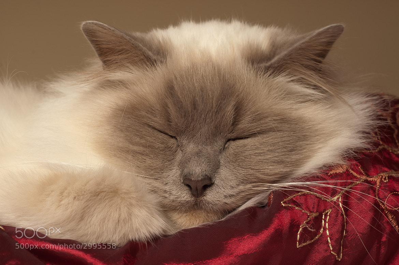 Photograph Sleeping Beauty by Adam Johnson on 500px
