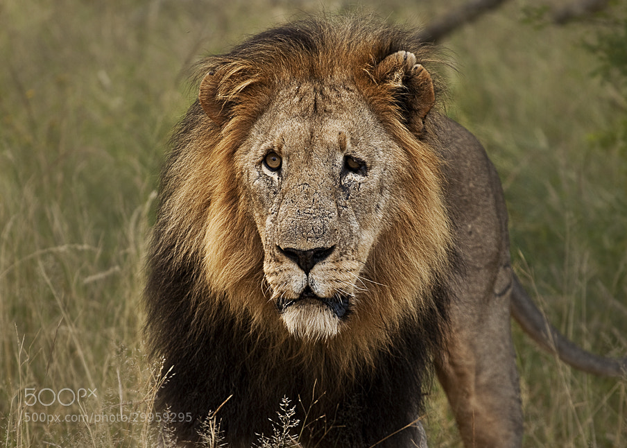 Photograph Old Male by 5200 Kelvin on 500px