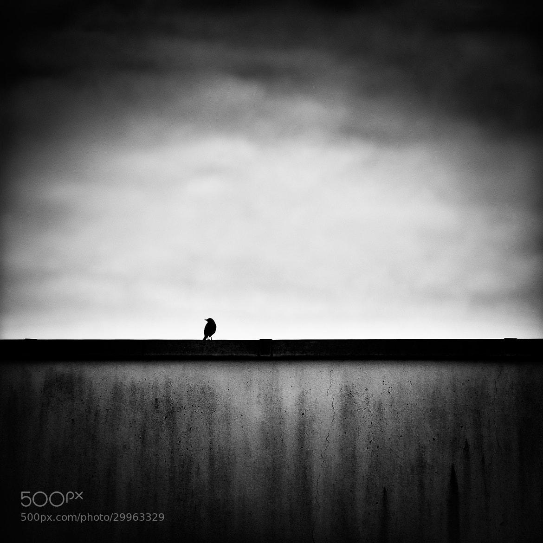 Photograph L'oiseau sur le mur by laurent lavergne on 500px
