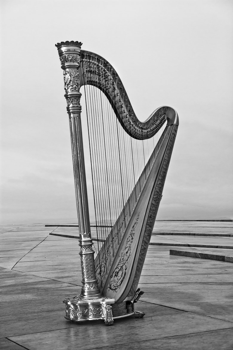 Photograph Harp by madeleinebergheim on 500px