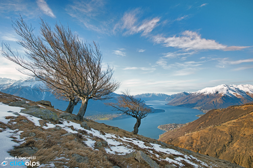 Photograph  Uncombed by Francesco Vaninetti on 500px