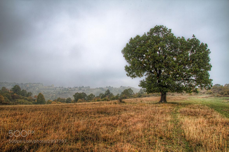 Photograph Foggy morning by Nikola Totuhov on 500px
