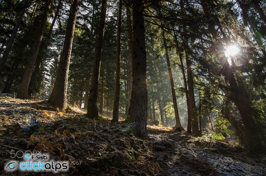 Photograph La luce tra i boschi... (Val Vigezzo, Ossola, Piemonte) by Francesco Sisti on 500px