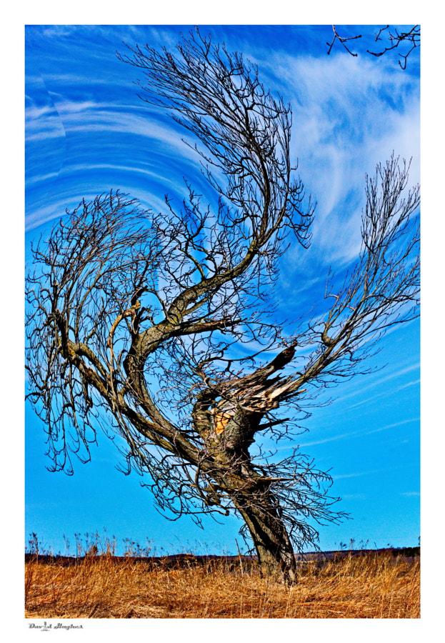 Cyclonic Tree