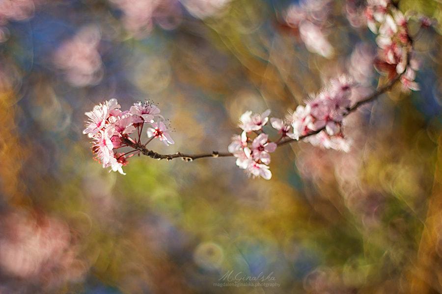Spring Walz by Magdalena Ginalska on 500px.com
