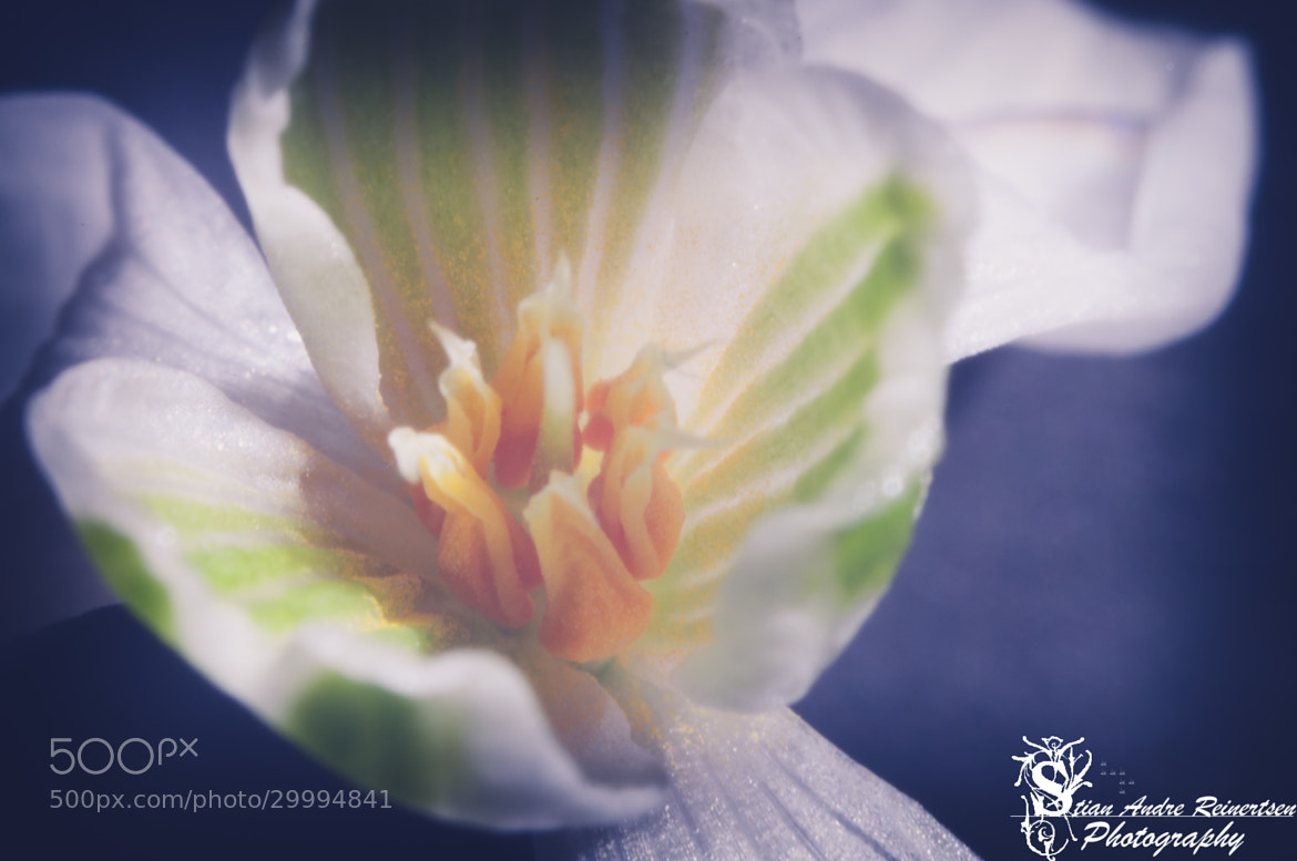 Photograph Anemone Flower by Stian Andre Reinertsen on 500px