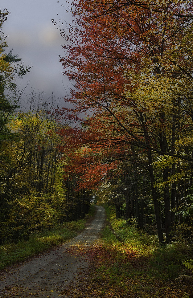 Photograph Back road in fall by Ernesto Franklin on 500px