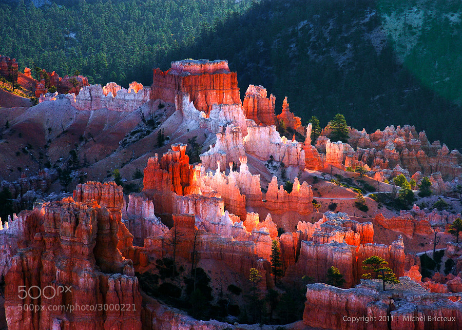 Should You go to Bryce Canyon or Zion Canyon?