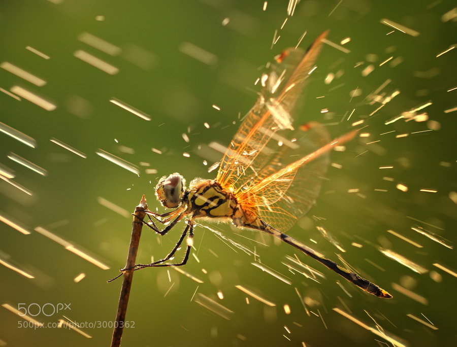 Photograph splashing by shikhei goh on 500px