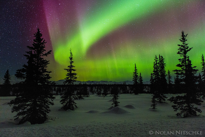 Photograph Trees in snow but without snow on them auroras by Nolan Nitschke on 500px