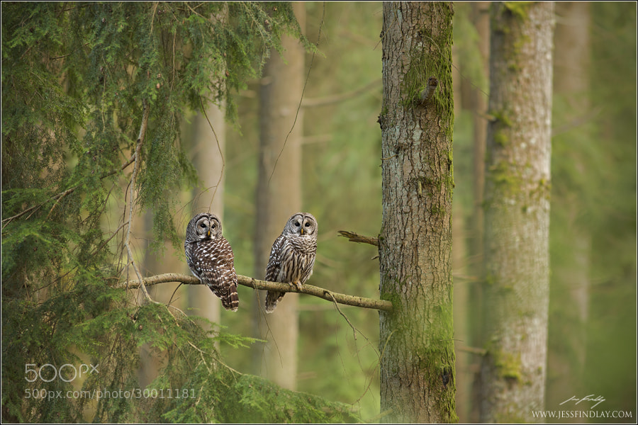 Photograph Forest Keepers  by Jess Findlay on 500px