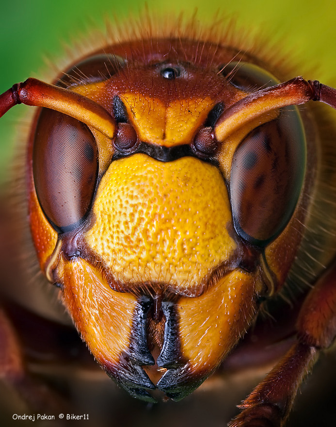 Photograph yellow jacket by Ondrej Pakan on 500px