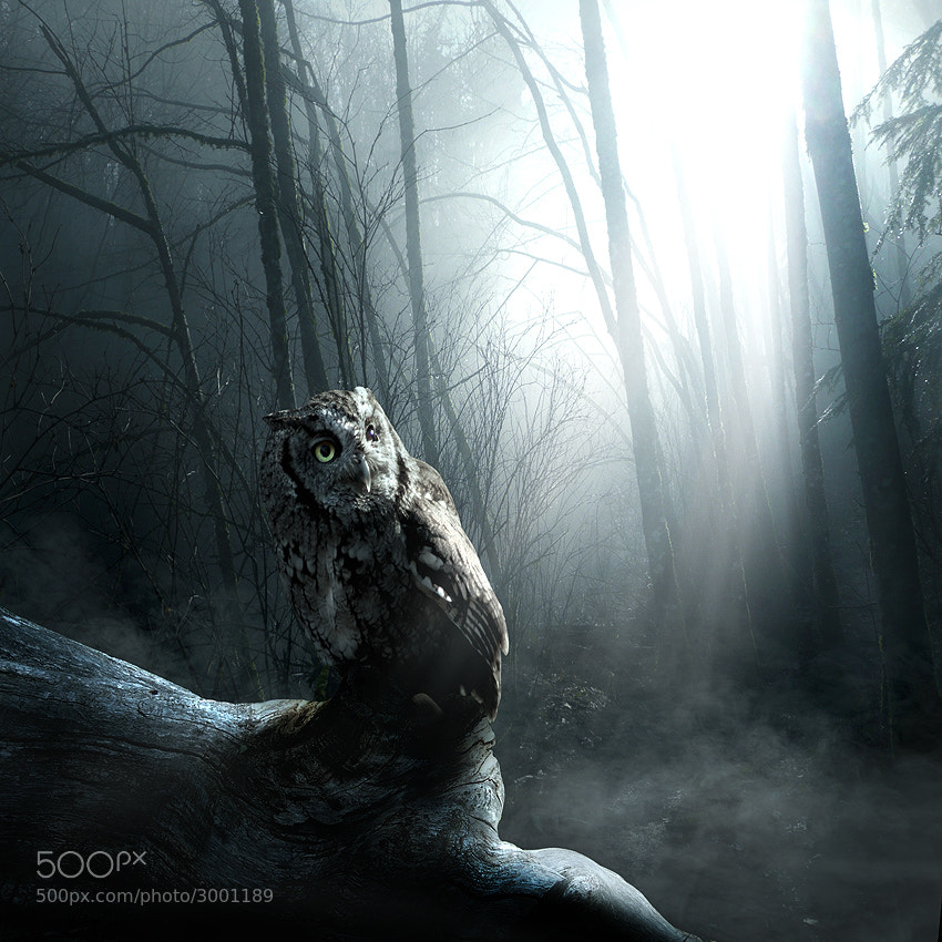 Photograph Forest guardian by Tomasz Zaczeniuk on 500px