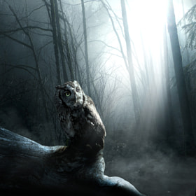 Forest guardian by Tomasz Zaczeniuk on 500px.com