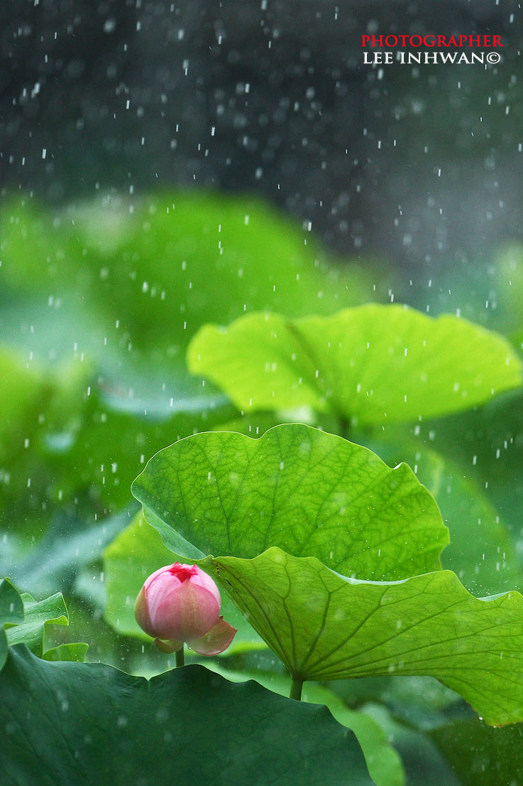 Photograph It's a rainy day by LEE INHWAN on 500px