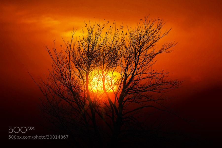 Photograph Evening Light by Mostafa Ammar on 500px